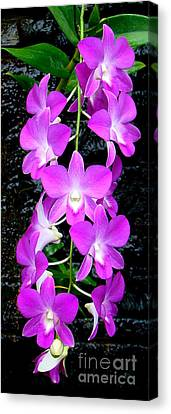 Cascading Orchids Canvas Print by Sue Melvin