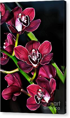 Cascading Red Orchids Canvas Print by Kaye Menner