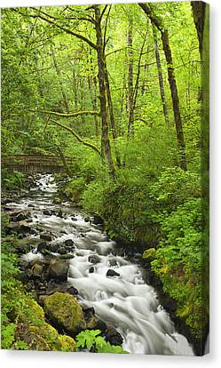 Lush Foliage Canvas Print - Cascading Stream In The Woods by Andrew Soundarajan