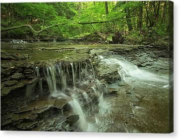 Cascading Water In Columbia Run Creek Canvas Print by Debbie Dicarlo