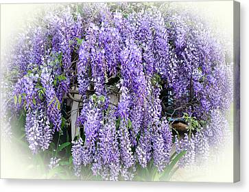 Cascading Wisteria Canvas Print by Kaye Menner