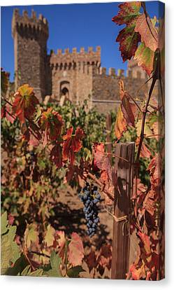 Harvest Castelle Di Amorosa Canvas Print by Scott Campbell