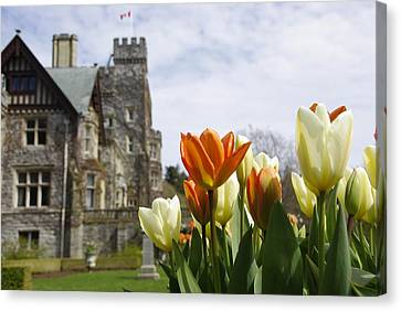 Canvas Print featuring the photograph Castle Tulips by Marilyn Wilson