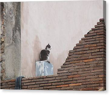 Canvas Print featuring the photograph Cat Above The Roman Ruins by Tiffany Erdman