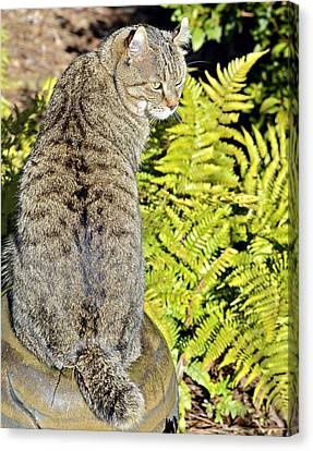 Cat And Ferns Canvas Print by Susan Leggett