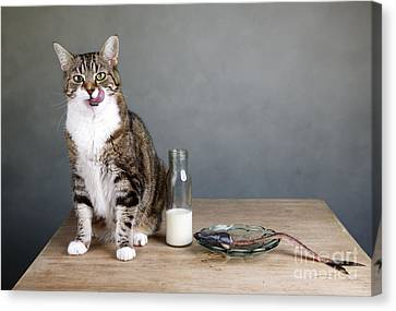 Cat And Herring Canvas Print