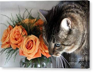 Cat And Roses Canvas Print