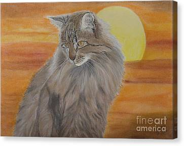 Cat And Sunset  Canvas Print by Cybele Chaves