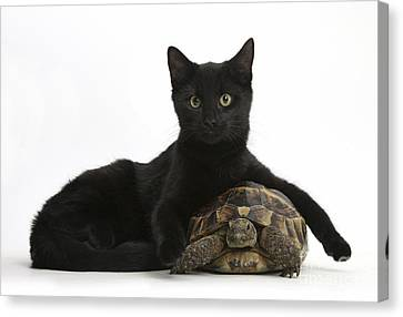 Cat And Tortoise Canvas Print by Mark Taylor