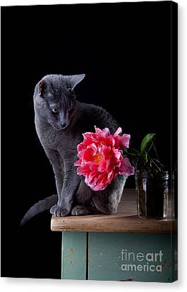 Cat And Tulip Canvas Print by Nailia Schwarz