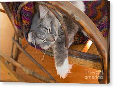 Cat Asleep In A Wooden Rocking Chair Canvas Print by Louise Heusinkveld