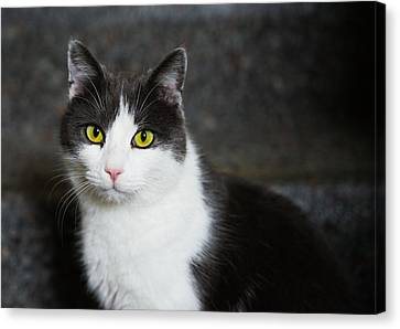 Cat Black And White With Green And Yellow Eyes Canvas Print by Matthias Hauser