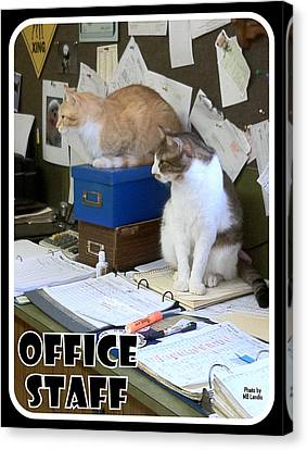 Canvas Print featuring the photograph Cat Business by Mary Beth Landis