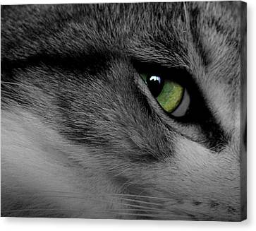 Cat Eye Canvas Print by AR Annahita