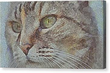 Cat Eye Canvas Canvas Print by Dan Sproul