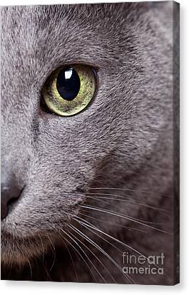 Cat Eye Canvas Print by Nailia Schwarz
