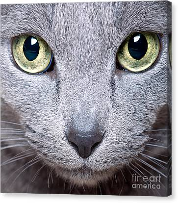 Curious Canvas Print - Cat Eyes by Nailia Schwarz