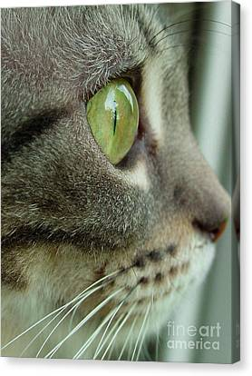 Cat Face Profile Canvas Print by Amy Cicconi