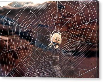 Canvas Print featuring the photograph Cat Faced Spider by Tarey Potter