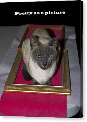 Cat Framed Canvas Print