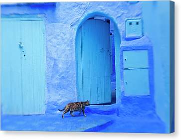 Cat In Doorway, Chefchaouen, Morocco Canvas Print by Peter Adams
