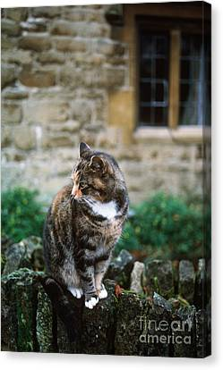 Cat In England Canvas Print by James L. Amos