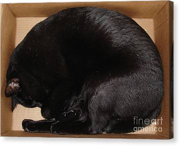 Canvas Print featuring the photograph Cat In The Box by Kerri Mortenson