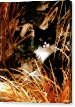 Cat In The Golden Grass Canvas Print by Gothicrow Images