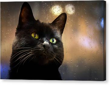 Cat In The Window Canvas Print by Bob Orsillo