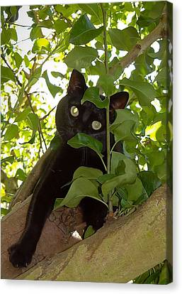 Cat In Tree Canvas Print by Jenny Setchell