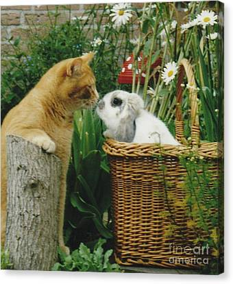 Canvas Print featuring the photograph Cat Kisses Rabbit by Jeepee Aero