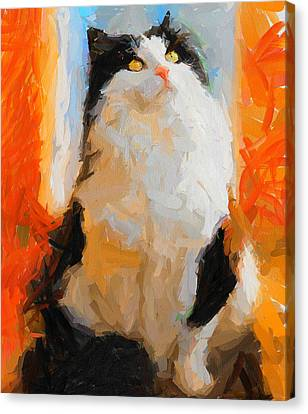 Cat Looking Up Canvas Print by Yury Malkov