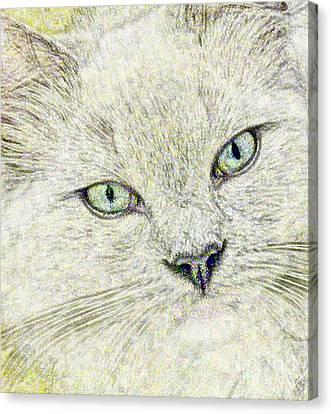Cat - Mink Ragdoll - Smokey Blu Canvas Print by Donna E Pickelsimer