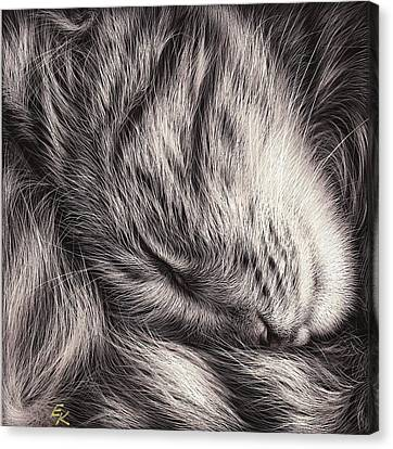 Cat Nap Canvas Print by Elena Kolotusha