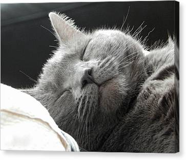 Catnap Canvas Print - Cat Nap by Karen Cook