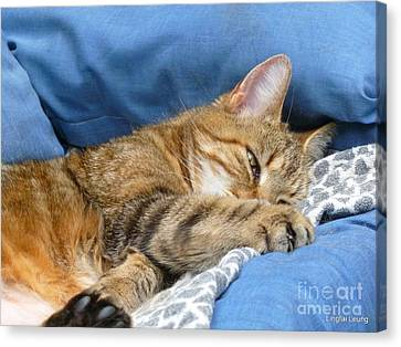 Canvas Print featuring the photograph Cat Nap by Lingfai Leung