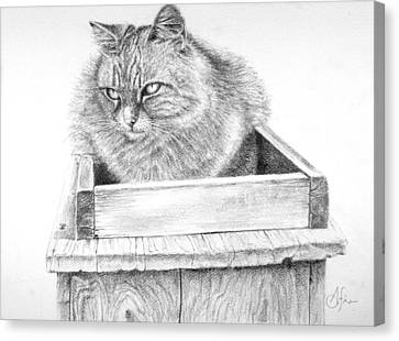 Canvas Print featuring the drawing Cat On A Box by Arthur Fix