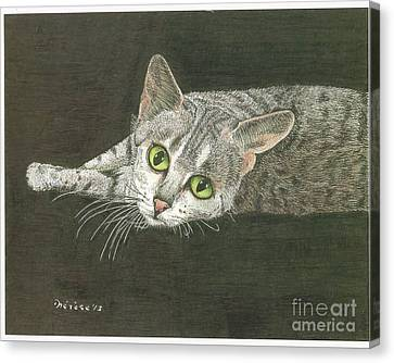 Cat On Black Canvas Print