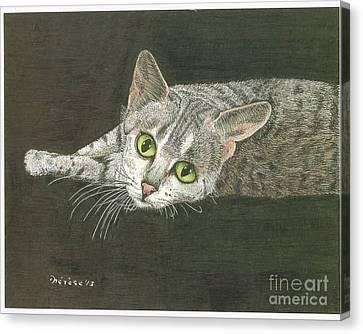 Cat On Black Canvas Print