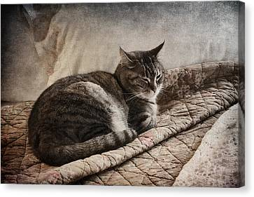 Cat On The Bed Canvas Print by Carol Leigh