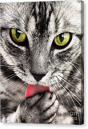 Canvas Print featuring the photograph Cat by Paul Fearn