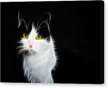 Cat Portrait Fractal Artwork Canvas Print by Matthias Hauser