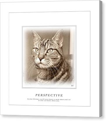 Cat Reflections 1 Canvas Print