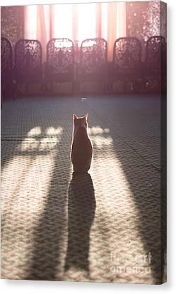 Cat Sitting Near Window Canvas Print by Matteo Colombo