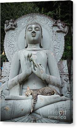Cat Sleeping On The Lap Buddha Statues. Canvas Print