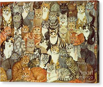 Cat Spread Canvas Print by Ditz