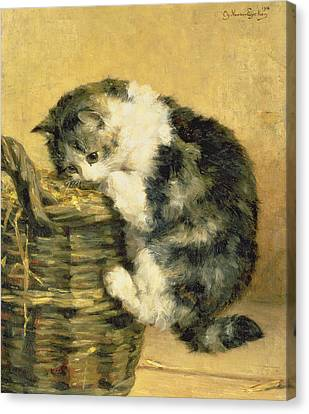 Cat With A Basket Canvas Print by Charles Van Den Eycken