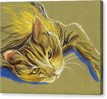 Cat With Gold Eyes Canvas Print by MM Anderson