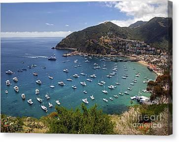 Catalina Island Canvas Print