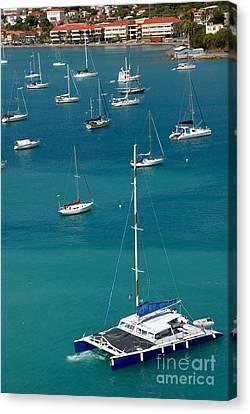 Catamaran  St Thomas Usvi Canvas Print by Amy Cicconi